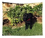 Black Labrador Retriever Puppy Tapestry
