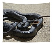 Black Racer Tapestry