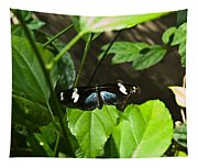Black Tropical Butterfly Tapestry