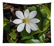 Blood Root Or Blood Wort Tapestry