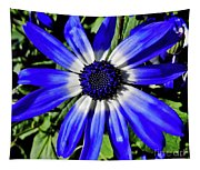 Blue And White African Daisy Tapestry