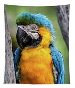 Blue And Yellow Macaw Portrait  Tapestry