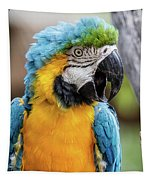 Blue And Yellow Macaw Vertical Tapestry