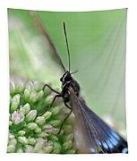 Blue Butterfly On Sedum Tapestry