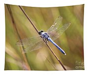 Blue Dragonfly Against Green Grass Tapestry