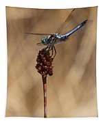 Blue Dragonfly On Brown Reed Tapestry