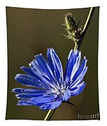 Blue Dream.. Tapestry