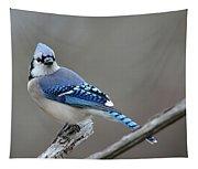 Blue Jay 2 Tapestry