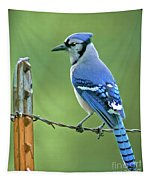 Blue Jay On The Fence Tapestry