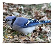 Blue Jay With A Full Mouth Tapestry