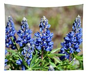 Blue Lupines Tapestry