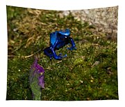 Blue Poison Arrow Frog Tapestry