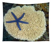 Blue Starfish Tapestry