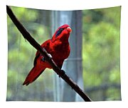 Blue-streaked Lory Tapestry