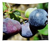Blues In The Florida Berries Tapestry