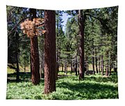 Bluff Lake Ca Fern Forest 2 Tapestry