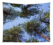 Bluff Lake Forest 2 Tapestry