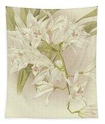 Boat Orchid  Cymbidium Tapestry