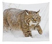 Bobcat In Snow Tapestry