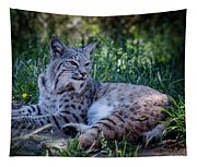 Bobcat In The Grass Tapestry