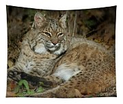 Bobcat Warming In The Autumn Sun Tapestry