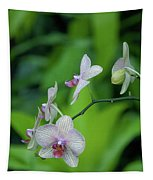 Bowersox Tapestry