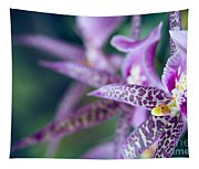 Bratonia Miltassia Charles M Fitch Izumi Orchids Tapestry