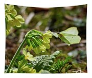 Brimstone On Cowslip Primrose Tapestry