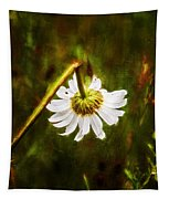 Broken Hearted Oxeye Daisy Asteraceae  Tapestry