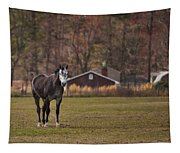 Brown And White Horse Tapestry