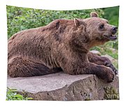 Brown Bear Tapestry