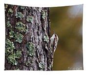 Brown Creeper Tapestry