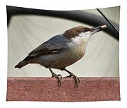 Brown-headed Nuthatch Tapestry