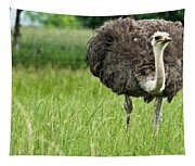 Browsing Ostrich Tapestry