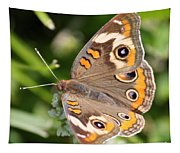 Buckeye Butterfly Square Tapestry