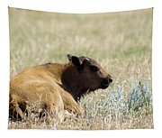 Buffalo Calf Tapestry