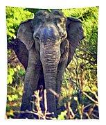 Bull Elephant Threat Tapestry