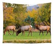 Bull Elk  Bugling With Cow Elks - Rutting Season Tapestry