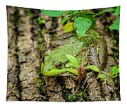 Bull Frog On A Log Tapestry