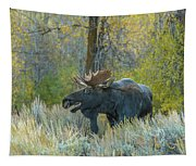 Bull Moose In The Evening Tapestry