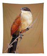 Burchell's Coucal - Rainbird Tapestry