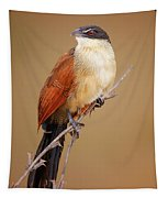 Burchell's Coucal - Rainbird Tapestry