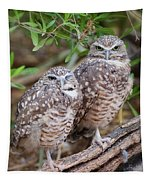 Burrowing Owl Pair  Tapestry