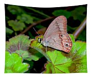 Butterfly On Geranium Leaf Tapestry