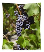 Cabernet Tapestry