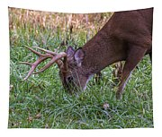 Cades Cove Buck Tapestry