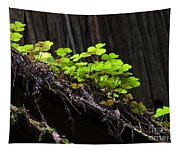 California Redwoods 4 Tapestry