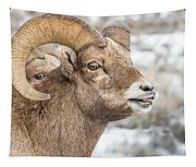 Calling All Ewes Tapestry