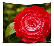 Camellia Japonica Tapestry