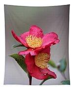 Camellia Sasanqua Yuletide 1 Tapestry
